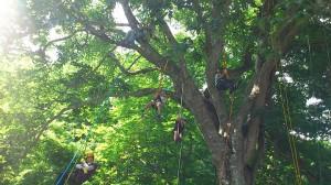 木登り体験会
