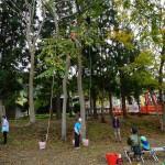 木登り体験会2016.10.22